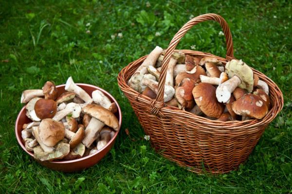 Сушеный белый боровой гриб: главные характеристики и преимущества покупки
